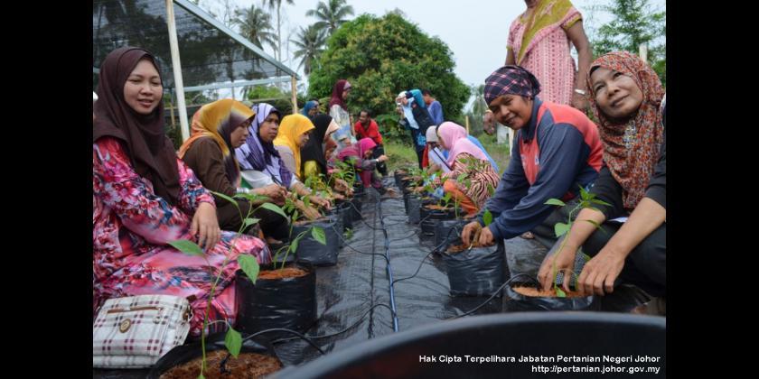 Kursus Pertanian Bandar - Mersing