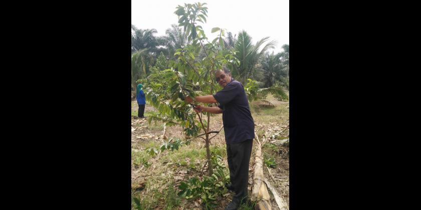 Latihan Pegawai Kursus Hands On Cantasan Tanaman Durian Belanda