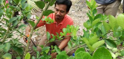20 pegawai ikuti kursus cantasan tanaman durian belanda