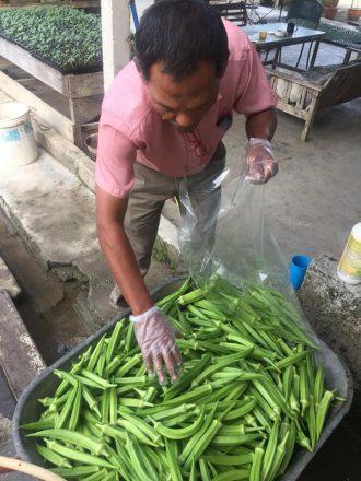 Projek Tanaman Sayuran Encik Yusof bin Ibrahim di Kg Gunung Pulai