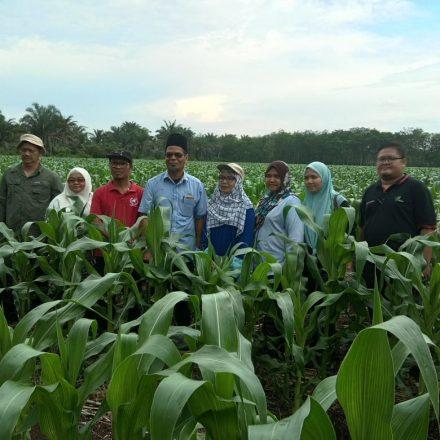 Lawatan Pemantaun Projek Kluster Jagung