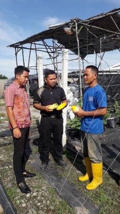 Lawatan Khidmat Nasihat Kawalan Perosak Bersepadu (IPM) bagi Perosak Lalat Buah