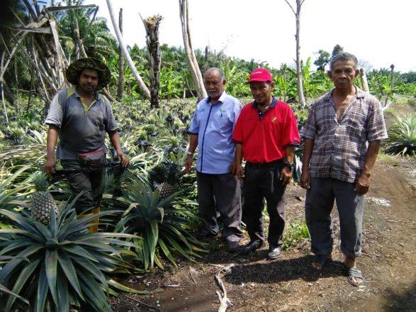 Lawatan Pemantauan Projek Tanaman Pisang Tanduk, Tanaman Ubi Kayu dan Tanaman Nanas Moris Gajah