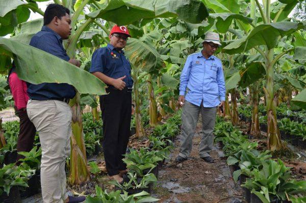 Lawatan Pengarah Pertanian Johor ke Projek Industri Tanaman Herba, Encik Idris Bin Selamat