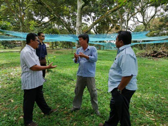 Lawatan Pemantauan Projek Durian oleh Pegawai Pertanian Daerah Muar