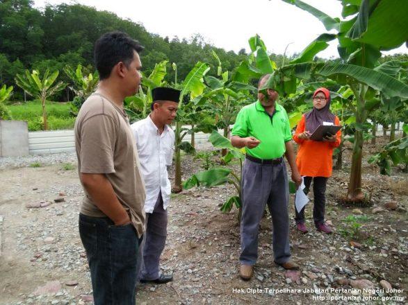 Pemantauan pasukan teknikal pertanian tangani punca penyakit tanaman petani
