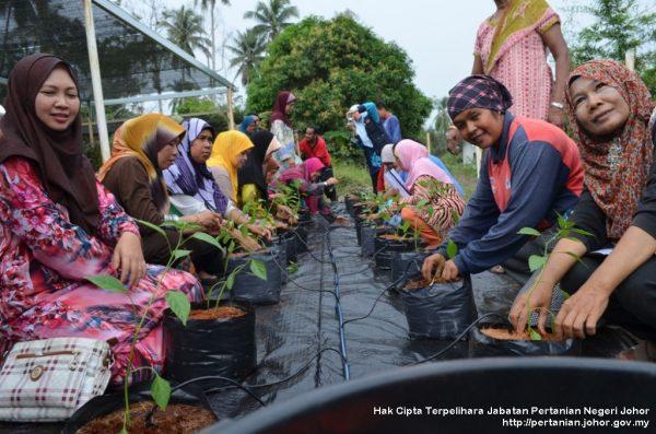 Ibu tunggal ikuti kursus pertanian bandar