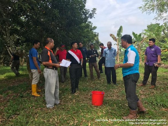Pengenalan Siri Tanah & Hormon Penggalak Buah Durian