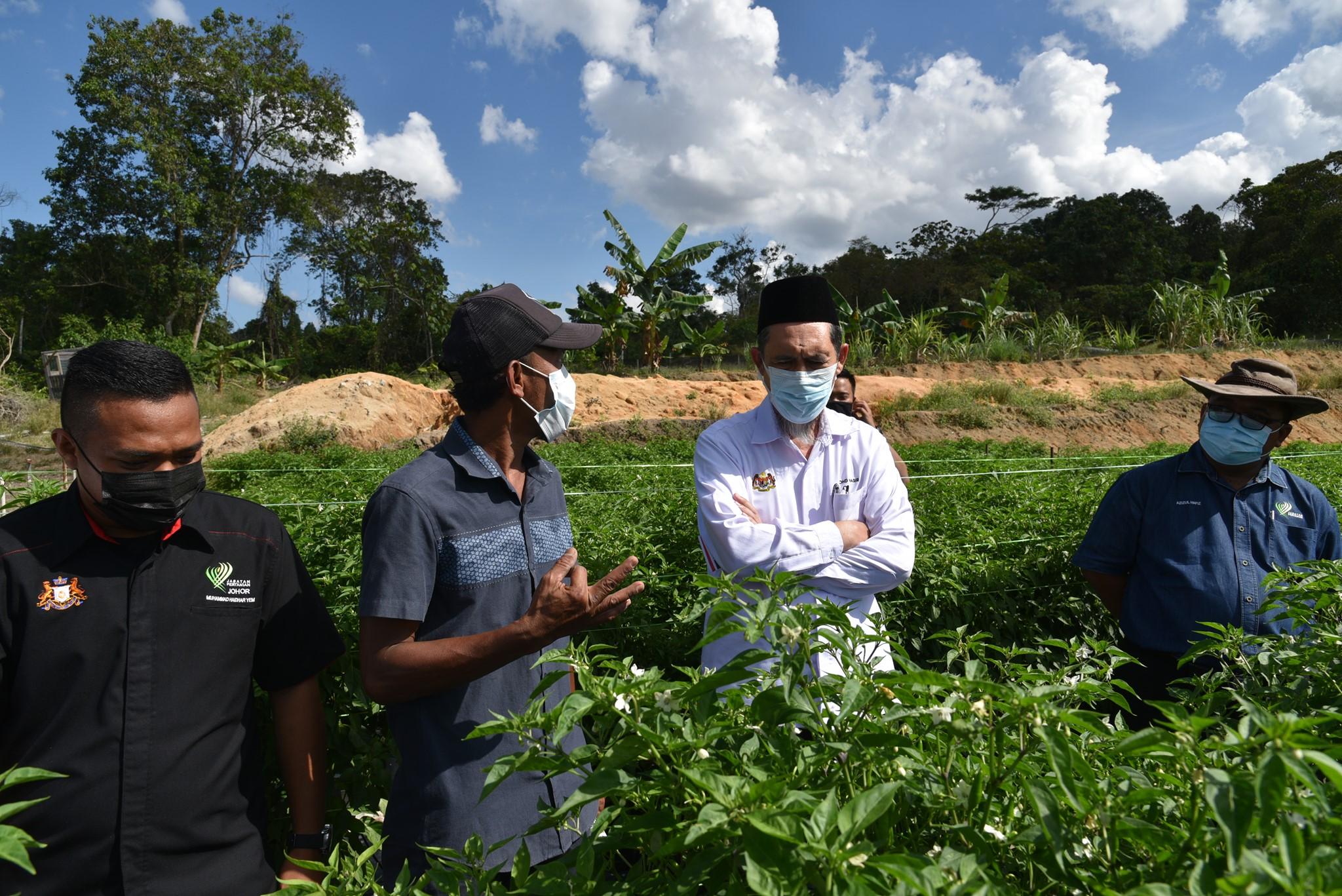 Ketua Pengarah Pertanian Ke Turun Padang